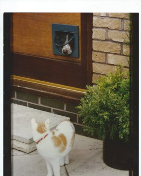 On The House cat flap