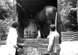 Great Expectations - starring the horse